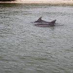 des dauphins juste a 3 mètres du bateau