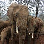 A lot of elephants!