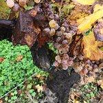 Photo de Bordeaux Wine Trails
