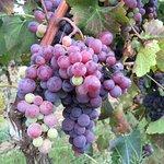 Foto de Sirignano Wine Resort