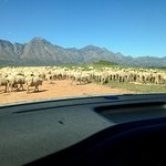 You may see sheep on your way in from the highway