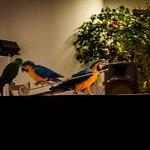 Photo de Hotel Caprici