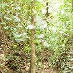 Foto de Middleham Falls & Ti Tou Gorge