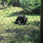 Bear still sleeping