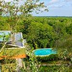 Mangrove Escapes Foto