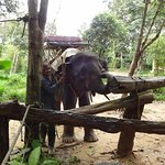 Photo of Khao Sok Palmview
