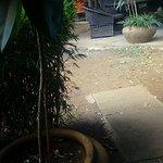 IMAG0066_large.jpg