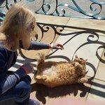 Und die Hauskatze, wie Garfield