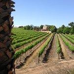 Photo of Skilpadvlei Wine Farm