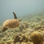DiveSail Diving Pty Ltd Foto