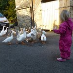 Feeding the ducks (again!)
