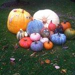 Pumpkins, squash, fall harvest