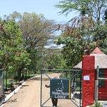 Mara River Lodge Picture