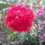 Flora in Garden