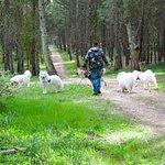 I dintorni dell'area picnic nello splendido Parco dell'Alta Murgia