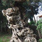 Photo of Agriturismo Case Damma