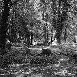 Jewish Cemetery of Łódź. Kodak Tri-X film photograph, Rolleiflex 3.5E camera.