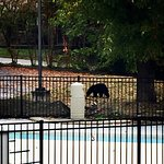 Beyond the pool, down from the tree finally; Oct. 27, 2016