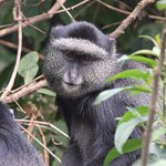Silver Monkey - during our guided excursion to the Neck