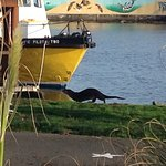 Otter @ Ogden!
