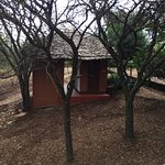 Photo of Ngorongoro Forest Tented Lodge