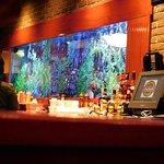 Cheddar's Fish Tank.