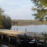 Dock over pond.