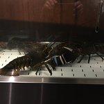 Red Lobster - lobsters in tank