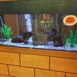 Isaac's - nice fish tank