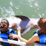 Photo of Dolphin Discovery Los Cabos