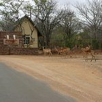 Gate of Olifants camp.