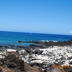 nice lava and coral beach
