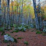 Couleurs d'automne dans les bois du Cirier