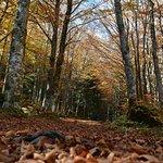 Vallée de la Courbière en automne