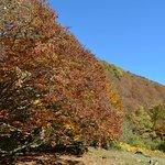 Plateau d'Embannel, automne 2016