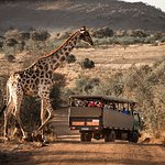 Game drive (Photo by Drive South Africa, #TrekSouthAfrica)