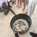 Schildkrötengeburt nur 30m vom Haus entfernt