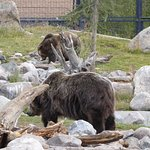 Grizzly and Wolf Discovery Center Foto