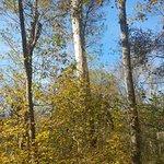 800-year old Bald Cypress