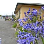 Foto de Palm Court Motel