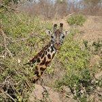 Foto de Lion Trails Safaris - Day Tours