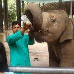 Фотография Pinnawala Elephant Orphanage