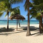 Grand Oasis Palm Photo