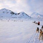 Dogsledding, husky, winter,