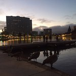 Lake Merritt 2016, when the lights come on and the birds line up
