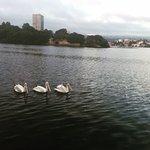 Lake Merritt 2016, three storks