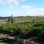 Marianne Wine Estate Guesthouse ภาพถ่าย