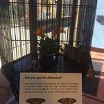 Comparison of the male and female monarchs.