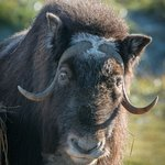 Alaska Wildlife Conservation Center Foto