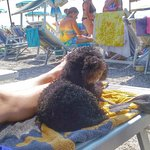 Spiaggia Ex Soggiorno Leonessa